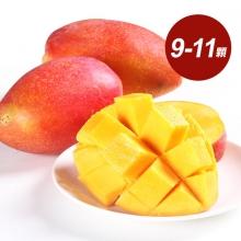 在欉黃枋山愛文芒果A級 5斤9-11顆