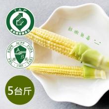 玉米筍-5台斤