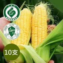 黃玉米(10支)