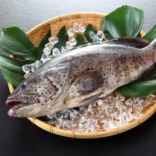 肥嫩石斑魚600g